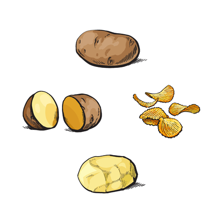 Whole and cut, peeled and unpeeled potato and crispy chips, sketch style vector illustration isolated on white background. Hand drawn potato set - whole, cut in half, peeled, fried as chips