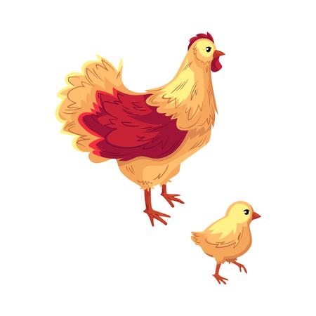 2 つの面白い鶏、鶏と赤ちゃんひよこ、白い背景で隔離の漫画ベクトル図。面白い漫画スタイルのチキン、鶏とひよこ、ベクトル イラスト  イラスト・ベクター素材