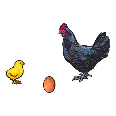 vector kip kip bruin ei, geel kuiken donkerblauw kip schets set geïsoleerd. Illustratie op een witte achtergrond Stock Illustratie