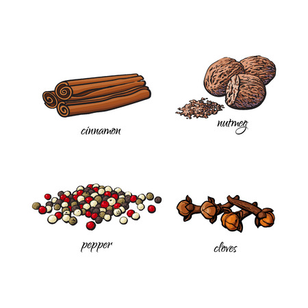 vector flat cartoon sketch hand drawn Spices, seasoning, flavorings and kitchen herbs set. Dry cinnamon, canella sticks, cloves black pepper and nutmeg. Isolated illustration on a white background Illustration