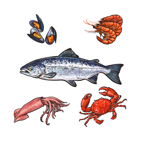 vector sketch cartoon sea crayfish lobster, squid tuna fish, red crab and mussel set. Isolated illustration on a white background. Seafood delicacy, restaurant menu decoration design object concept