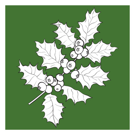 Mistletoe black and white branch, twig with leaves and berries, Christmas decoration element, sketch vector illustration on green background.