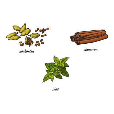 wektor płaski rysunek szkic ręcznie rysowane przyprawy, przyprawy, aromaty i zestaw ziół kuchennych. liście mięty, suchy cynamon, paluszki canella i kardamon. Odosobniona ilustracja na białym tle Ilustracje wektorowe