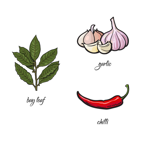 vector flat cartoon sketch style hand drawn Spices , seasoning, flavorings and kitchen herbs set. bay leaves, red chili peppers and garlic. Isolated illustration on a white background. Иллюстрация