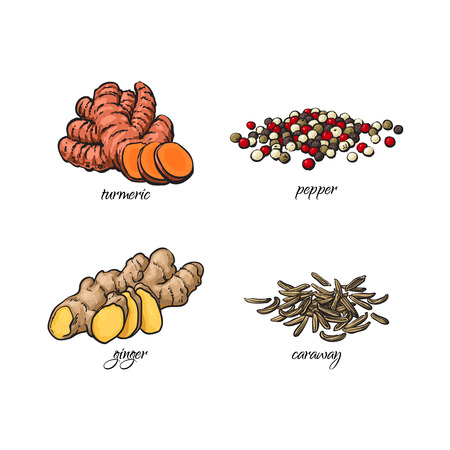 vector flat cartoon sketch hand drawn Spices, seasoning, flavorings and kitchen herbs set. Black pepper, caraway seeds turmeric and ginger roots. Isolated illustration on a white background Illustration