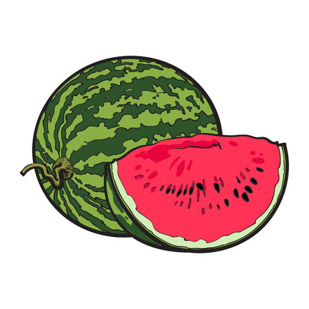 Ripe and juicy watermelon, vector illustration isolated on white background. Drawing of fresh watermelon, whole and a slice, vegetarian snack Çizim