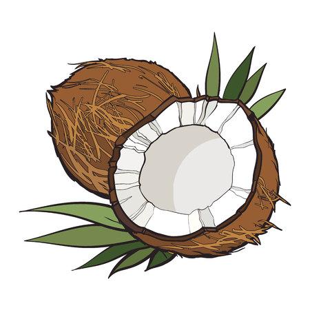 Gehele en gebarsten kokosnoot, vectordieillustratie op witte achtergrond wordt geïsoleerd. Tekening van kokosnoot op witte achtergrond, heerlijke gezonde veganistensnack