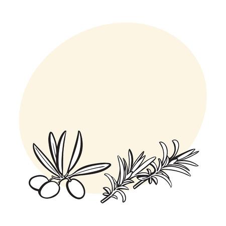 ローズマリー ハーブ、スパイス、食材、テキスト用のスペースと黒と白のアウトライン スケッチ イラスト ベクトル。ローズマリーの現実的な手書