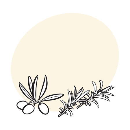 rosemary herbs, spices, ingredients, black and white outline sketch style vector illustration with space for text. Realistic hand drawing of rosemary leaves with space for text. Ilustração