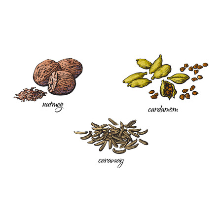 vector platte cartoon schets hand getrokken Specerijen, kruiden, smaakstoffen en keukenkruiden set. Karwijzaad, nootmuskaat en kardemom. Geïsoleerde illustratie op een witte achtergrond