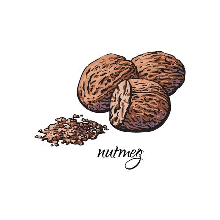 Whole and ground fragrant nutmeg with caption, sketch style vector illustration isolated on white background. Hand drawn nutmeg, whole and powder, vector illustration
