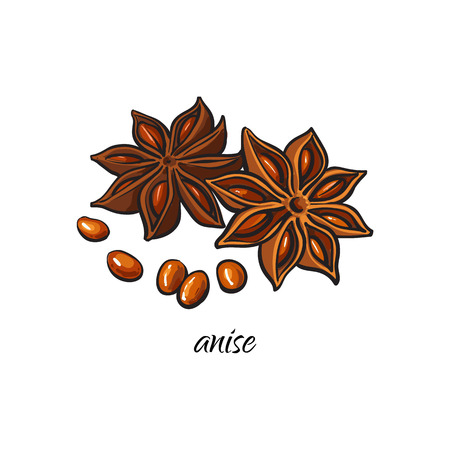 vector flat cartoon sketch style hand drawn dry anise star with seeds image. Isolated illustration on a white background. Spices , seasoning, flavorings, condiments and kitchen herbs concept.