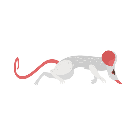Home rat as transmitter, carrier of dangerous diseases, illnesses, parasites, cartoon vector illustration isolated on white background. Rat, rodent, disease transmitter, side view cartoon illustration