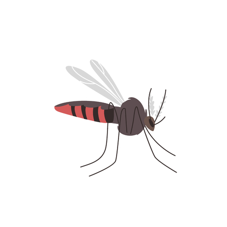 Anopheles mosquito, dangerous carrier, transmitter of zika, dengue, chikungunya, malaria and other infections, cartoon vector illustration isolated on white background. Zika transmitting mosquito Ilustração