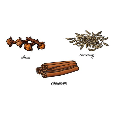 Vector flat cartoon sketch hand drawn Spices, seasoning, flavorings and kitchen herbs set. Dry cinnamon, canella sticks, cloves and caraway seeds . Isolated illustration on a white background Illustration