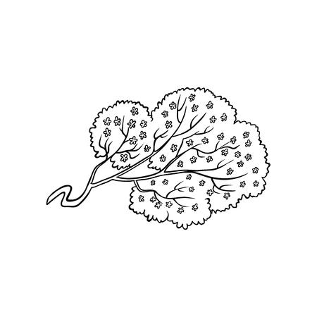 Blühender Kirschblüte-Kirschbaumast mit Blumen in Schwarzweiss.