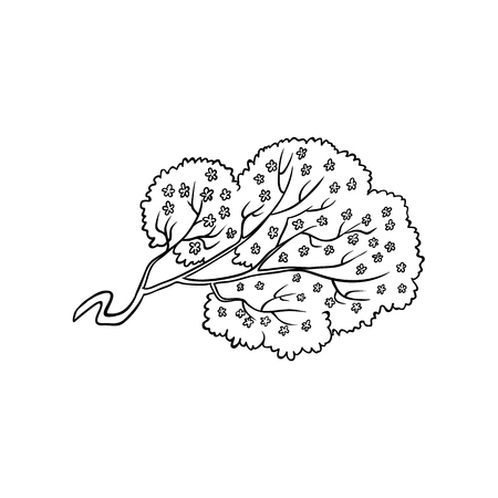 Blooming sakura cherry tree branch with flowers in black and white. Illustration