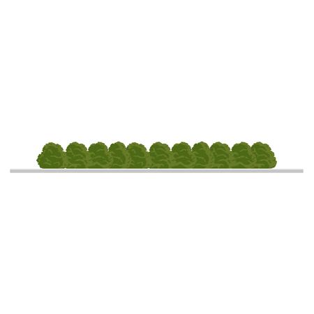 City tree, bush, hedge decoration elements. Flat style illustration on white background. Collection of green bush , city landscape elements. Illustration