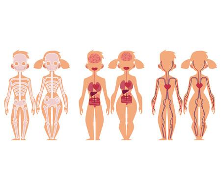Insieme di infographics educativo del grafico di anatomia - scheletro, sistema vascolare del sangue e organi interni, illustrazione di vettore del fumetto isolata su fondo bianco. Anatomia umana infografica, uomo e donna Archivio Fotografico - 93716286