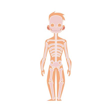 인간의 신체, 해부학 - 남성 뼈, 인간의 골격의 벡터 플랫 구조. 해부학 골격 시스템, 교육, 과학 디자인 개체입니다. 격리 된 그림, 흰색 배경입니다. 일러스트