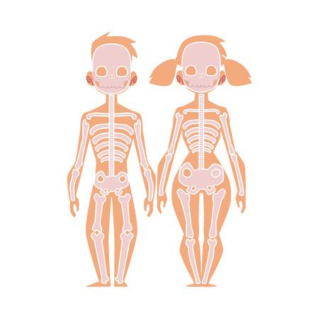 人体のベクター平らな構造、解剖学 - 女性、男性の骨、人間の骨格。解剖学的骨格系、教育、科学デザインの対象。●孤立したイラスト、白い背景