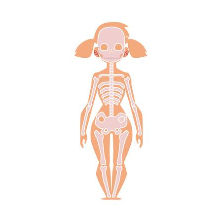 Educational anatomy chart infographics of human skeleton, female body, cartoon vector illustration isolated on white background. Human skeleton, anatomy chart for kids with female body