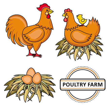 Vector flat chicken set. Brown rooster, cock, hen chicken, eggs in hay nest, yellow small chick sitting at chicken, poultry farm. Isolated illustration, white background. Organic food design.