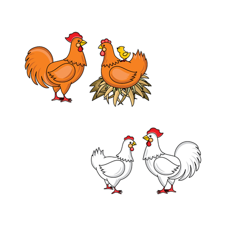 vector flat brown, white rooster, cock with red crest and hen chicken with yellow chick at back in hay nest. Isolated illustration on a white background. Farm poultry advertising, poster design. Illustration