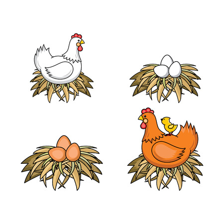 Vector flat poultry farm chicken set. Brown, white hen chickens, eggs in hay nest, yellow small chick sitting at chicken. Isolated illustration, white background. Organic food design Stock Illustratie