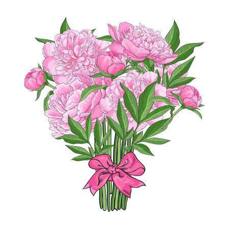 Bunch, bouquet of pink peony flowers tied up with ribbon, sketch style, hand drawn vector illustration isolated on white background. Hand-drawn vector peony flowers tied up with ribbon