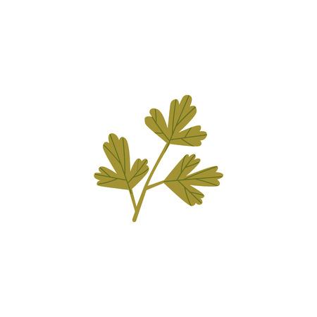 Fresh green parsley, coriander, cilantro leaf, spring, twig, cartoon vector illustration isolated on white background. Isolated cartoon illustration of fresh green parsley, coriander, cilantro leaf. Banco de Imagens - 93731213