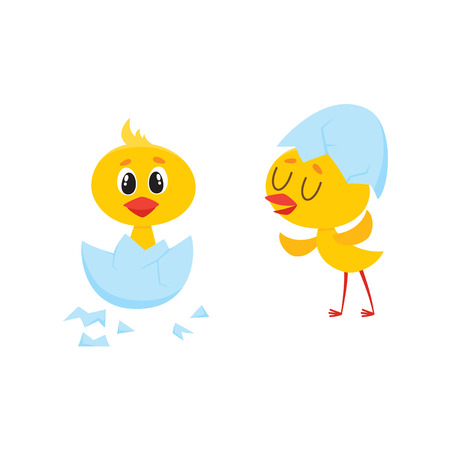 Vector cartoon cute baby chicken characters set. Yellow small funny newborn chicks hatching, sitting in egg, standing with shell at head. Flat bird animal, isolated illustration on a white background.