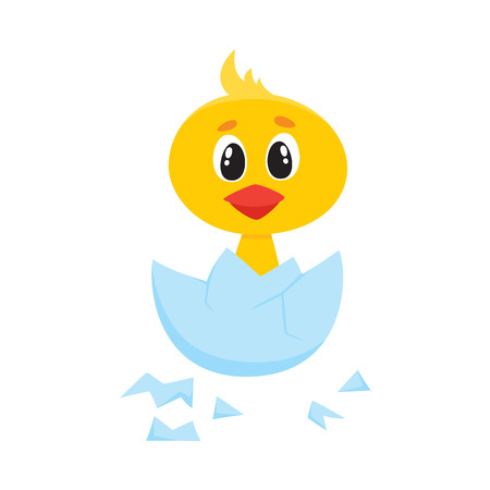 Vector cartoon cute baby chicken character. Yellow small funny chick hatching from egg. Flat bird animal, isolated illustration on a white background.