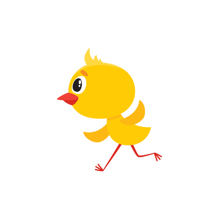 Vector cartoon cute baby chicken character. Yellow small funny chick running. Flat bird animal, isolated illustration on a white background.