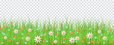 vector easter holiday template on transparent background with spring festive elements - green grass meadow, daisy flowers for your design. Illustration on green background