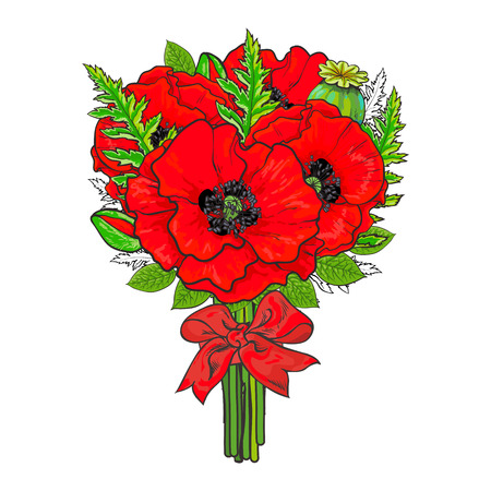 Big bunch, bouquet of red poppy flowers tied up with silk ribbon, sketch style, hand drawn vector illustration isolated on white background. Hand-drawn bunch of red poppy flowers tied up with ribbon
