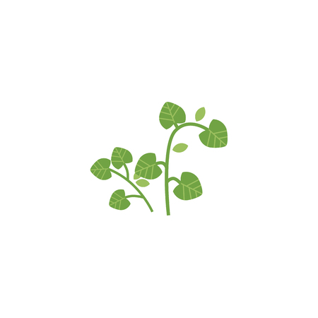 Flat vector style hand drawn parsley branch with stem, leaves image, isolated illustration on a white background. Spices , seasoning, flavorings and barbecue herbs concept. Illustration