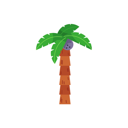 Single, one coconut palm tree with straight stem, flat cartoon vector illustration isolated on white background. Flat cartoon vector illustration of coconut palm tree Illustration