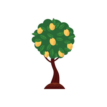 Vector flat green abstract   pear fruits tree with big foliage icon.