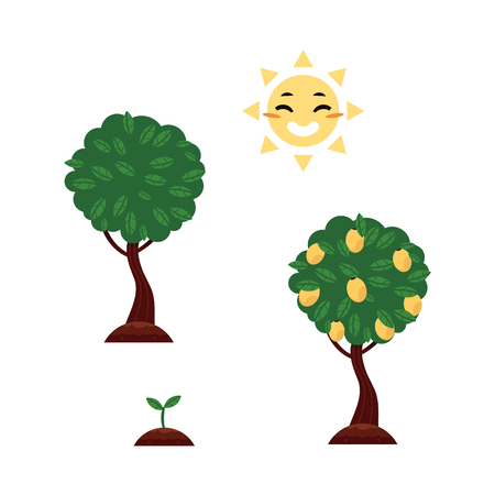 Vector flat tree planting stages, symbols icon set. Isolated illustration with forest, garden plants