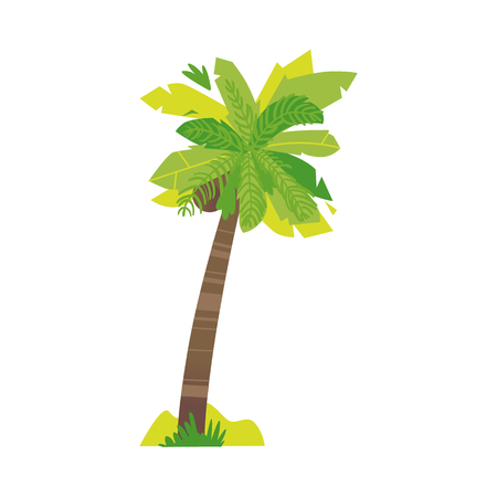 Stylized flat style cartoon coconut palm tree, vector illustration isolated on white background. Flat cartoon vector illustration of coconut palm tree, summer beach vacation element