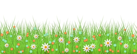 Spring background with grass and flowers border on white backdrop with empty space for text - greeting card decoration element for Easter congratulation. Cartoon vector illustration.
