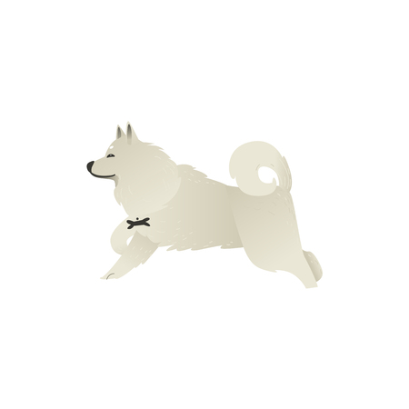 Happy smiling white fluffy dog running isolated on white background.