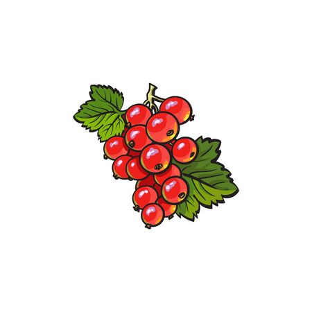 Red currant hand drawn ripe berries bunch with leaves icon. Sketch style natural organic vitamin food. Healthy vegetarian sweet dessert, juicy ingredient. Vector isolated illustration.