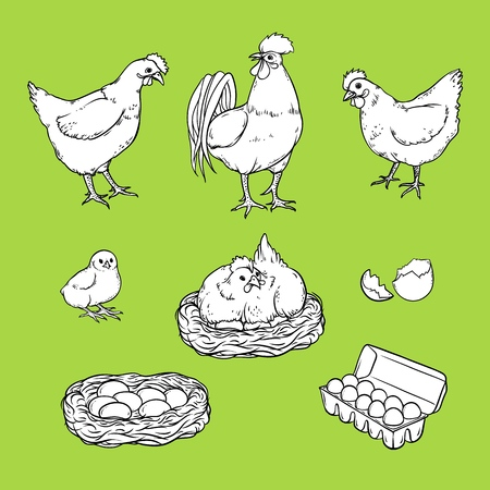 Collection of chicken graphic elements on colored background. Illustration