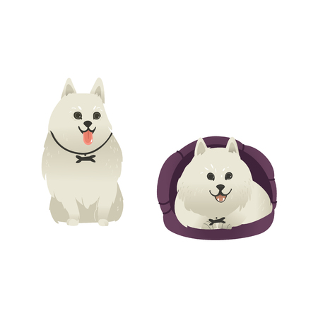 Set of happy smiling white fluffy dogs sitting and lying in dog bed, isolated on white background. Beautiful cartoon style characters for card, banner with pets. Vector illustration.