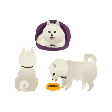 Set of happy smiling white fluffy dogs sitting, eating from bowl and lying in dog bed, isolated on white background. Beautiful cartoon style characters for card, banner with pets. Vector illustration. Illustration
