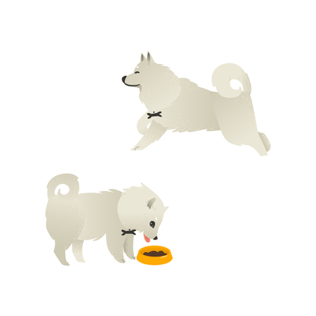 Set of happy smiling white fluffy dogs running and eating from bowl isolated on white background. Beautiful cartoon style characters for card, banner with pets. Vector illustration.  イラスト・ベクター素材