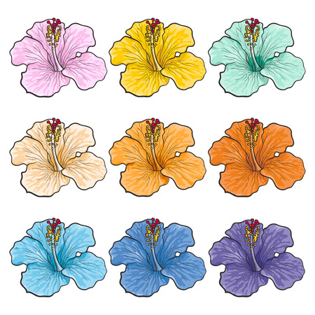 Multicolored tropical flowers hibiscuses isolated set in sketch style. Hand drawn different colors exotic blooms collection. Floral vector illustration of various rose mallow. Ilustracja