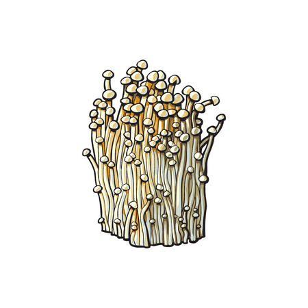 Enoki golden needle mushrooms icon. Hand drawn edible fungus. Sketch style natural organic vitamin food. Healthy vegetarian gourmet ingredient. Vector isolated illustration Ilustração